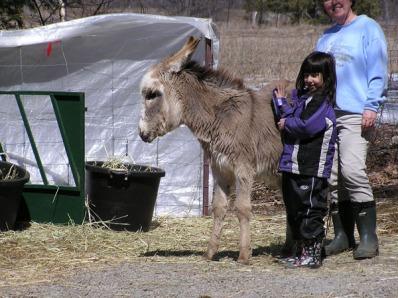 Kyla - Donkey Whisperer in Training