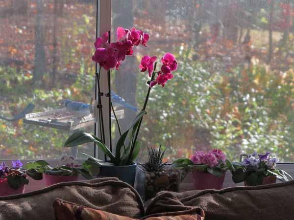 Blooms2003