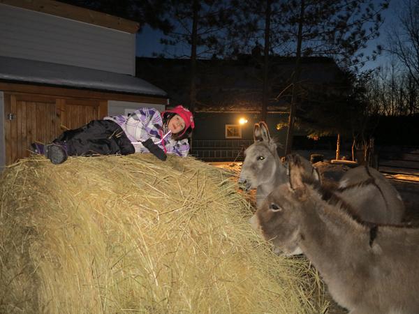 Donkey Nights003