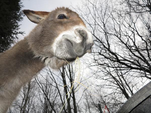 Rosie Camel