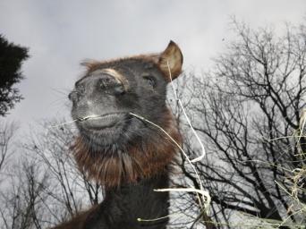 Bella Camel