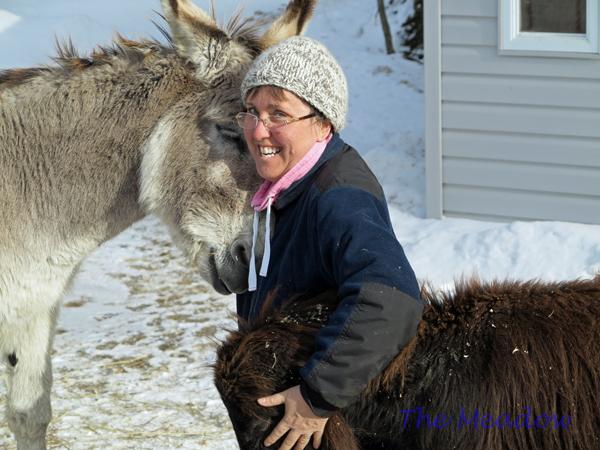 Donkey Hugs02