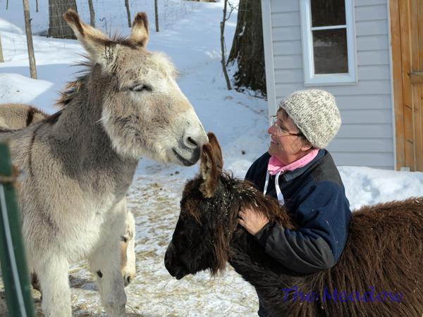 Donkey Hugs03