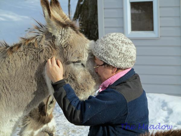 Donkey Hugs04