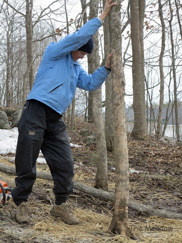 Lumber Jane05