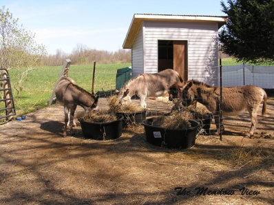 THE favourite place for feeders by popular donkey vote.