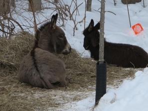 Winter hay bed