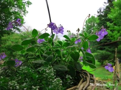 June 14 Gardens14