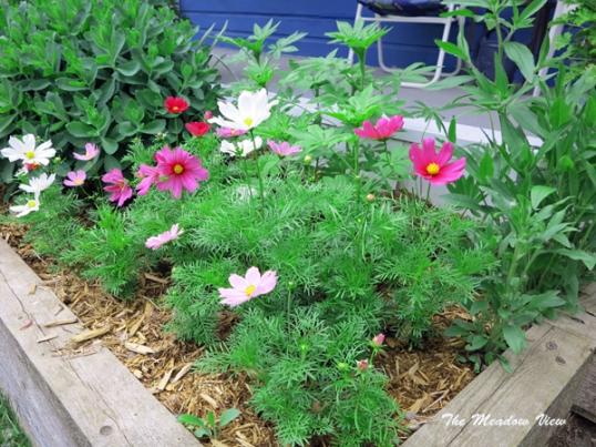 June 14 Gardens2