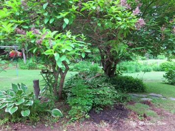 June 14 Gardens4