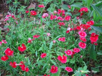 June 14 Gardens5
