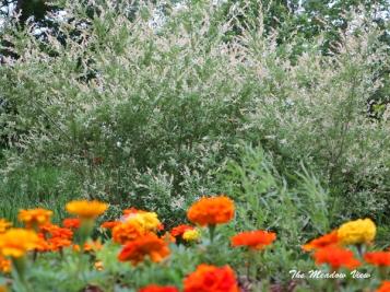 June 14 Gardens8