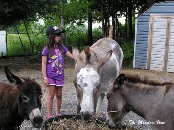 The Jr. Donkey Whisperer is back!