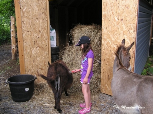 Kyla is growing as fast ... or more so than the donkeys!