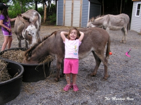 Ahhh... the perfect donkey to lean on!
