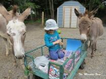 Donkey Guards