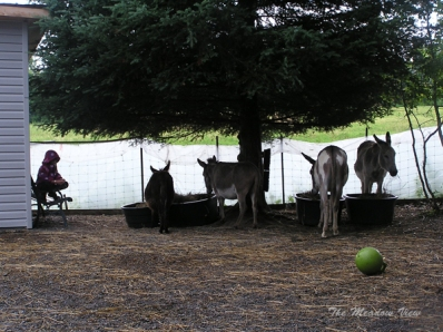 Kyla tells the donkeys how they came to be a family.