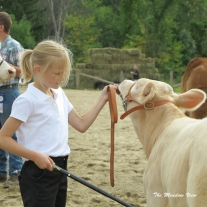 4H Cattle Show