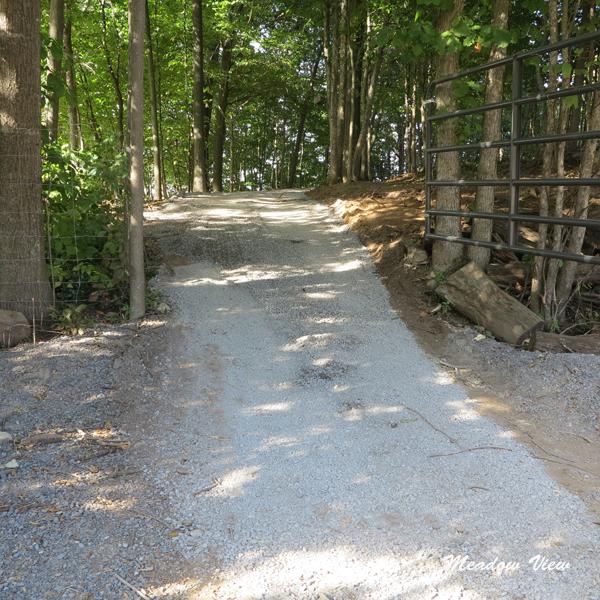 Woods Road3