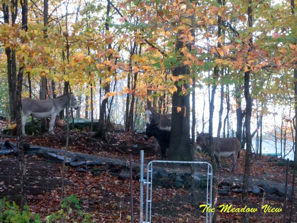 Autumn Yello1
