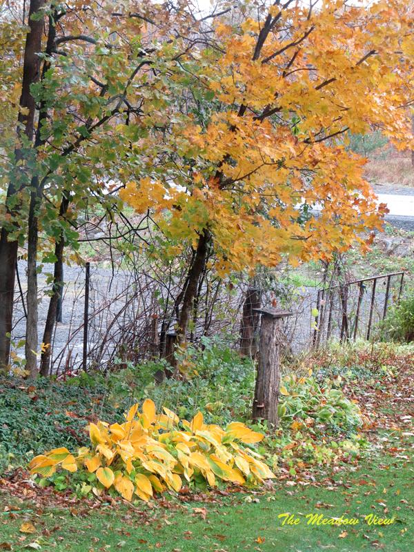 Autumn Yello3