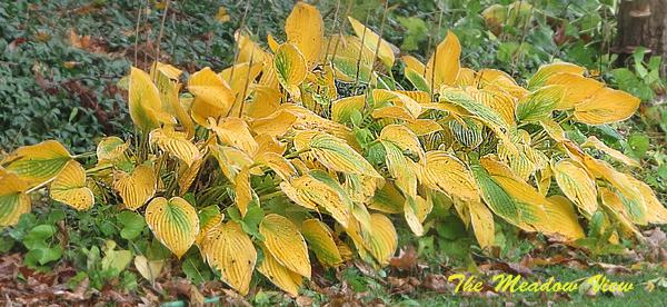 Autumn Yello4