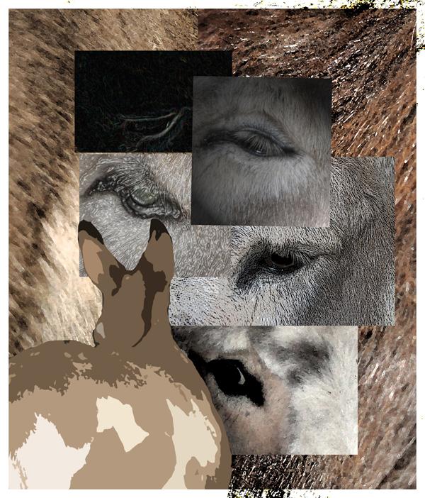 Picasso's Donkeys1