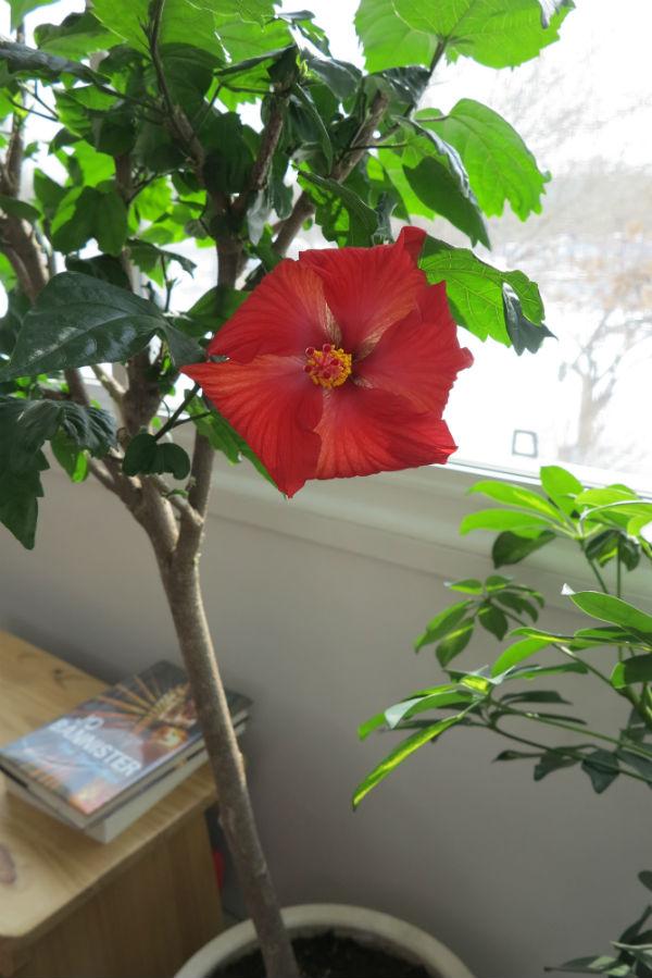 Feb 25 bloom (1)