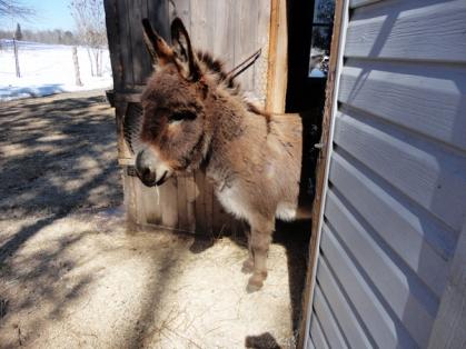 Did I hear someone munching a carrot chunk?