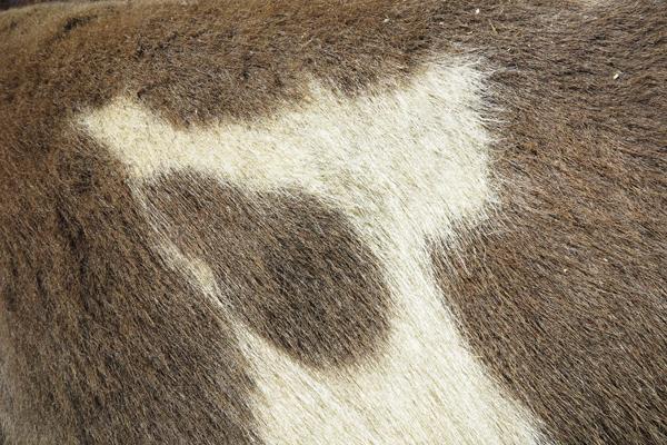 Rorschach Donkey2