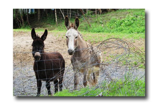 Donkey Talk01