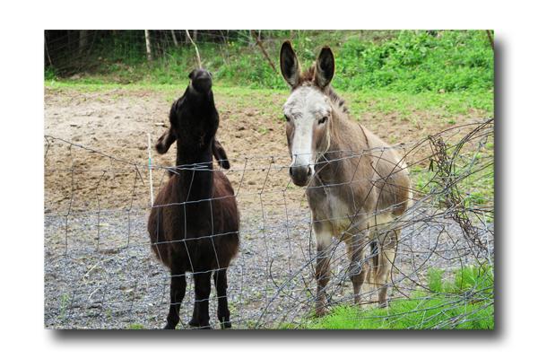 Donkey Talk02