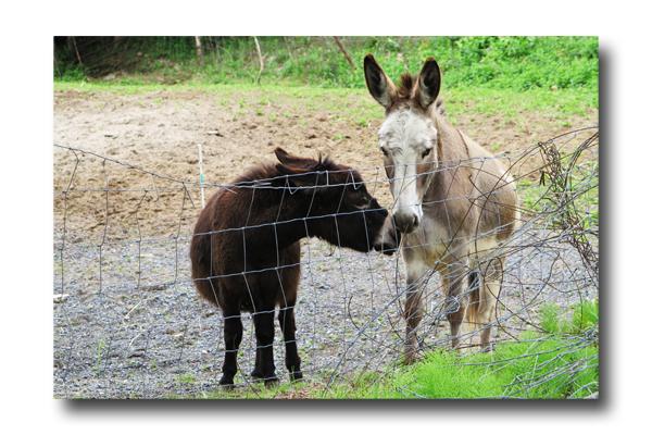 Donkey Talk03