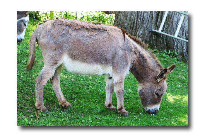 Donkey Talk04