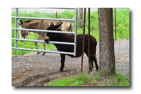 Donkey Talk05