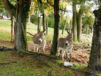 EC donkeys