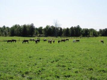 EC green field