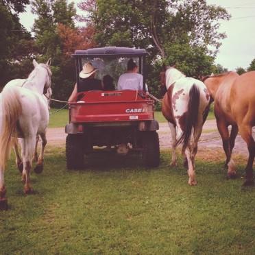 eC horse walk