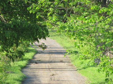 EC tree lined road
