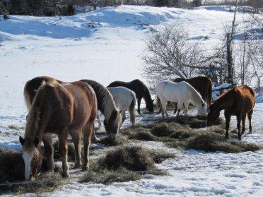 EC winter horses