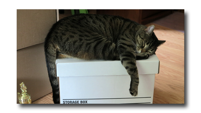 Cat Yoga01
