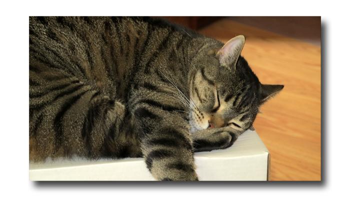 Cat Yoga02