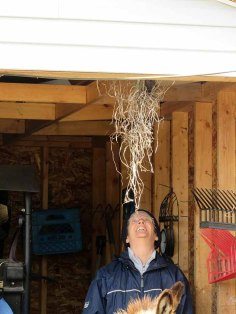 Some crazy bird keeps hanging this wig of straw from the rafters.