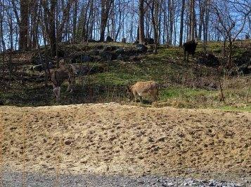 Donkeys on the hillside.