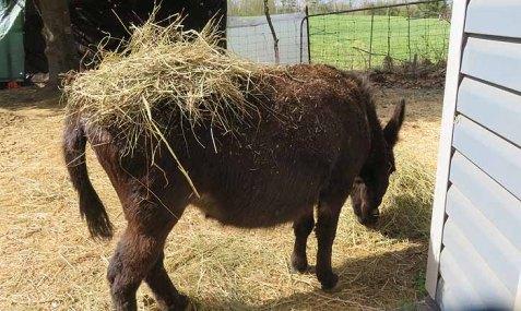 Fast food - donkey style.
