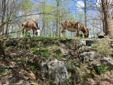 When we first got the donkeys we thought we were going to have to make pathways so they wouldn't fall off the rocky hillside. Ha!