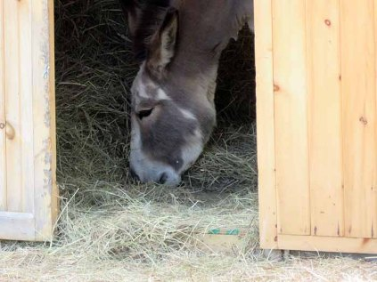 Darby loved having the hay barn to herself.