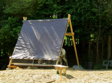 And the donkeys love that it provides some shade.