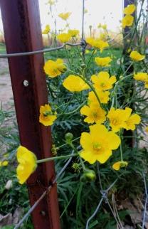 Paddock flowers.