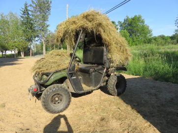 A little behind on the hay removal